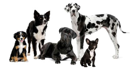 Dog of Various Breeds