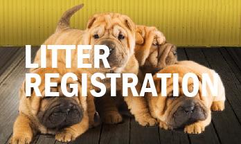 Continental Kennel Club Dog Registration