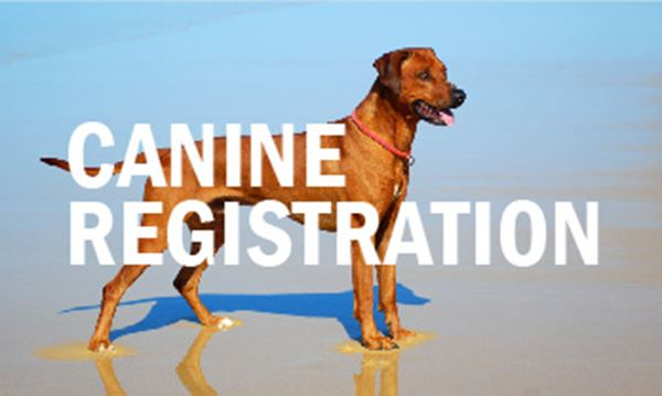 Canine-Registration.jpg