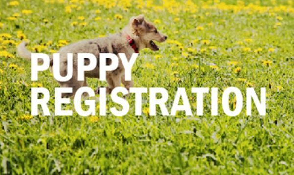 Puppy-Registration.jpg