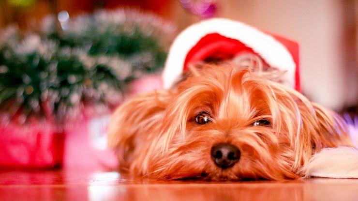 How-to-Prepare-Your-Dogs-for-the-Holidays-CKC.jpg