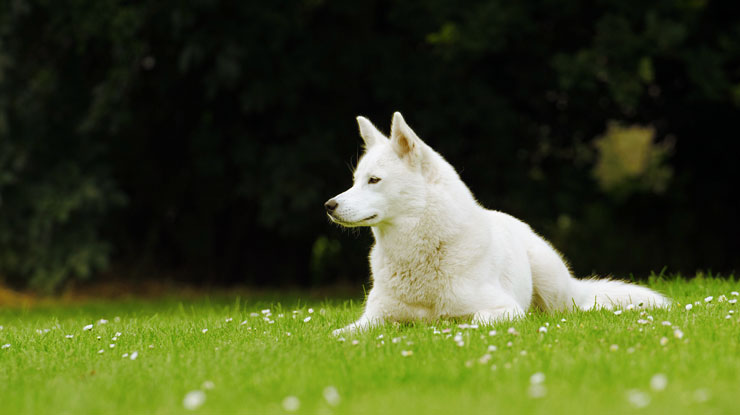 Is Your Dog Suffering From Seasonal Allergies