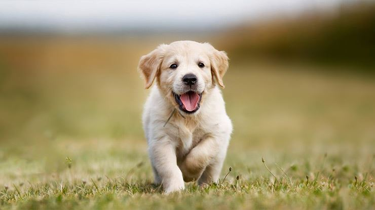 10-Things-to-Do-Before-Your-New-Puppy-Arrives-3.jpg