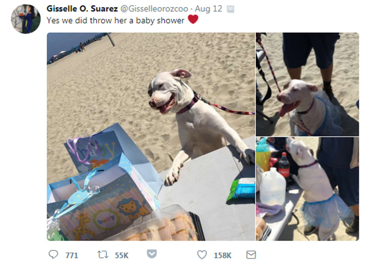 This Pregnant Pooch Just Had Her Own Baby Shower