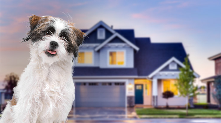 Home-Buying-Guide-for-Dog-Owners.jpg