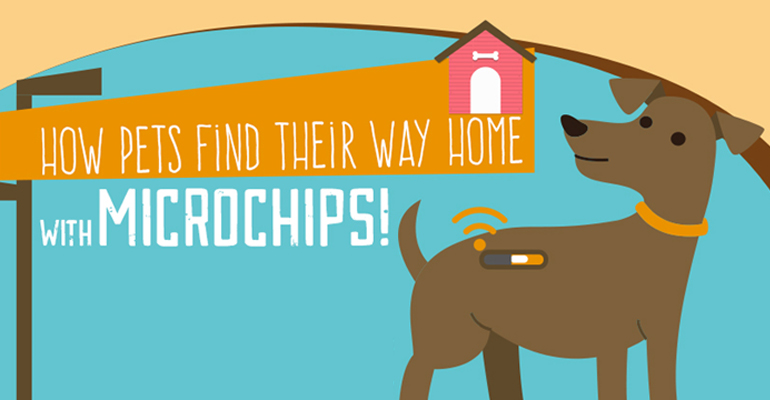 Microchips: How They Get Your Dog Home